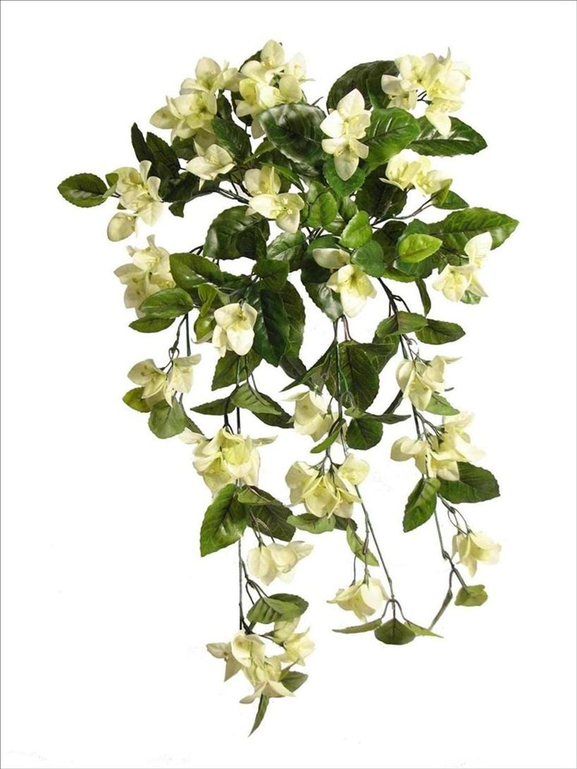 Flower Plant Png Hanging Vines Png by Plants